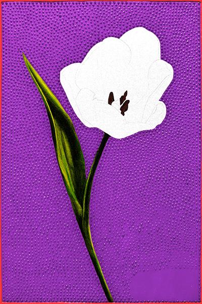 Tulip 600 progress2