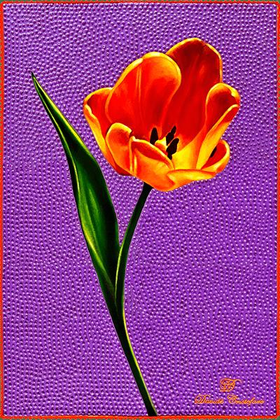 Tulip 600 progress4