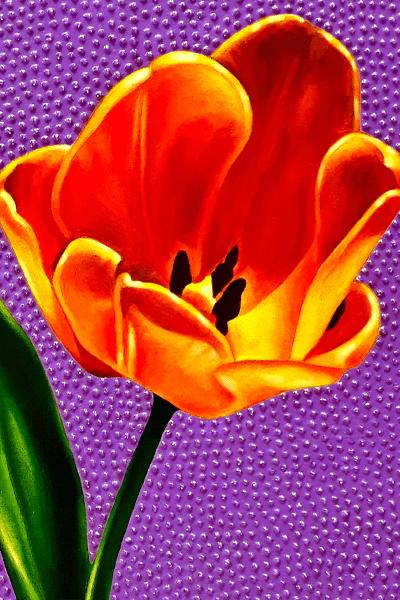 Tulip 600 progress5