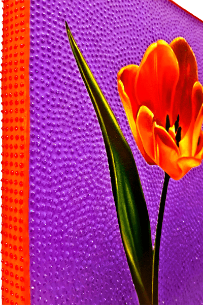 Tulip 600 progress6